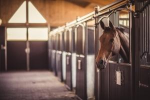 Pferderecht 1