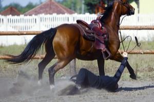 Pferderecht 6
