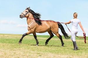 Pferderecht 3